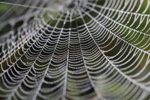 Raindrops caught in the pattern of a spider's web.